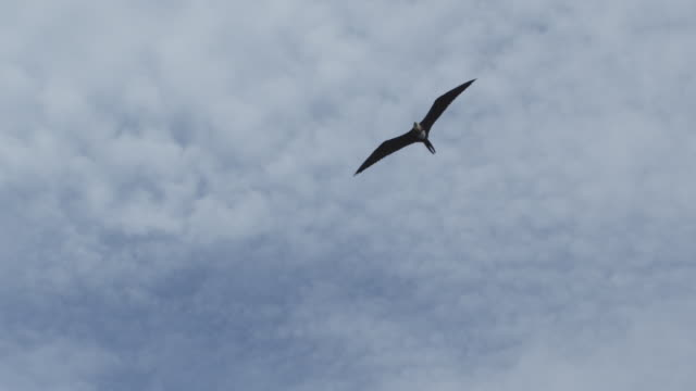 Slow motion bird flying in sky, Indonesia, 2012