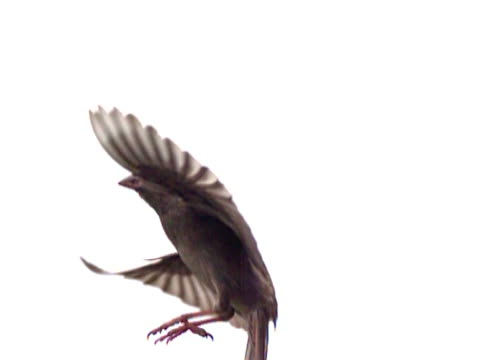 slow motion bird hover - hovering stock videos & royalty-free footage