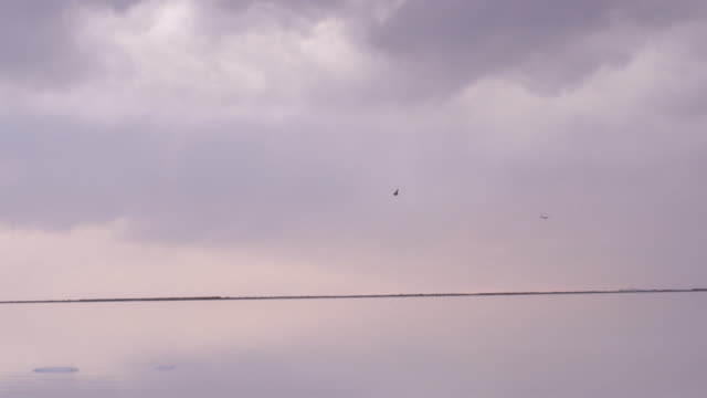 slow motion, birds fly over utah lake - 2匹点の映像素材/bロール