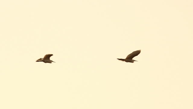 slow motion birds flying in the sky sunset - flock of birds stock videos & royalty-free footage