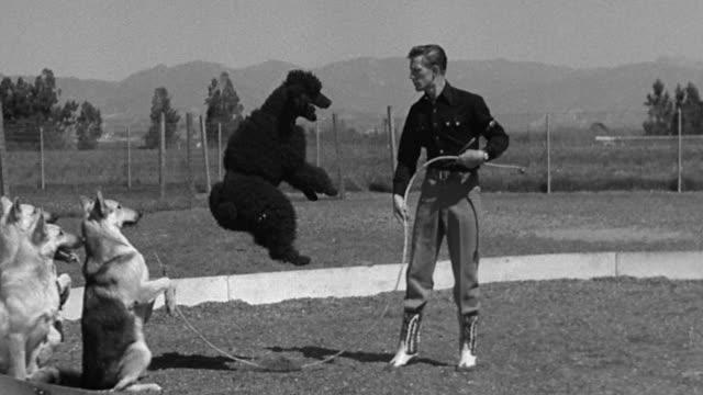 b/w 1954 slow motion black poodle jump roping with man + german shepherd on hind legs controlling rope - hopprep rep bildbanksvideor och videomaterial från bakom kulisserna