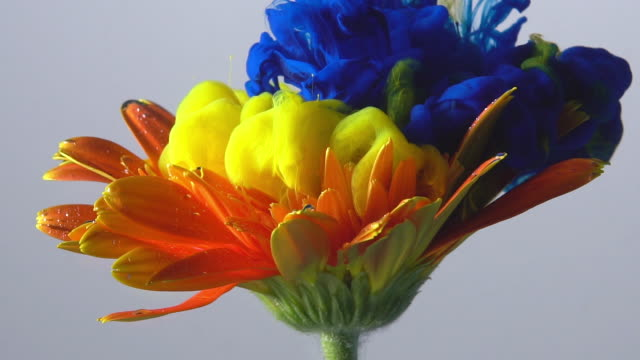slow motion blue and yellow ink drop into flower. - flower stock videos & royalty-free footage