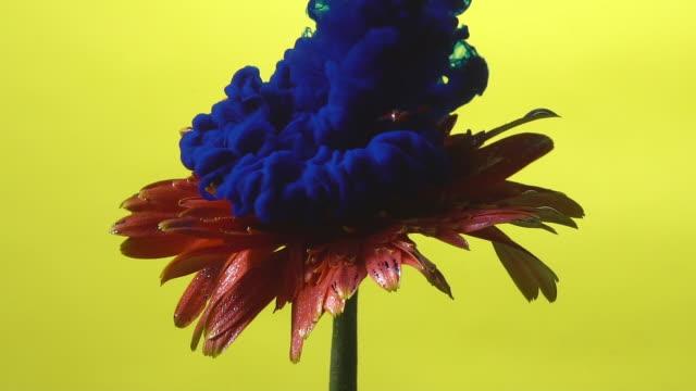 stockvideo's en b-roll-footage met slow motion blauwe inkt drop in de bloem. - bloemhoofd