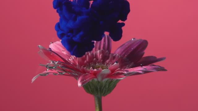 Slow motion Blue ink drop into flower.