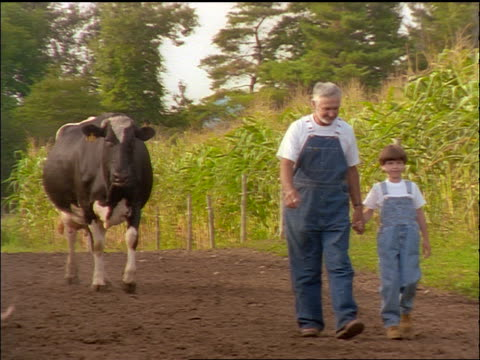 slow motion boy + grandfather in overalls holding hands + walking on dirt road followed by Holstein cow