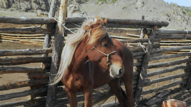 slow motion: brown horse with long mane standing by fence during sunny day - ulaanbaatar, mongolia - ulan bator stock videos & royalty-free footage