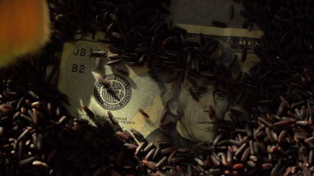 スローモーションブラッシング玄米カバー20ドル紙幣 - 玄米点の映像素材/bロール
