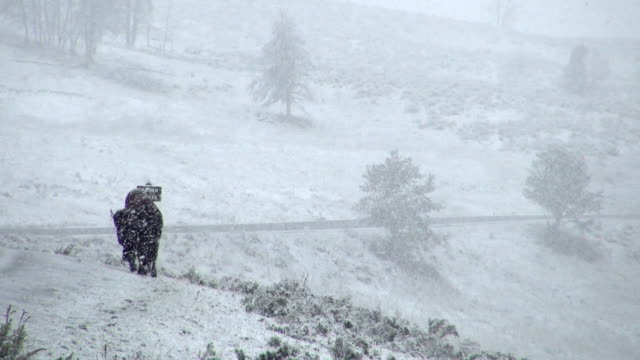 Slow Motion: Buffalo Walking Alone In The Heavy Snow