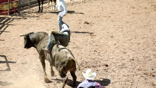slow motion bull ride rodeo arena - bucking bronco stock videos & royalty-free footage