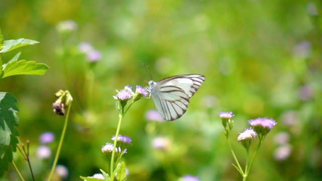 slow motion butterfly on flower - awe stock videos & royalty-free footage