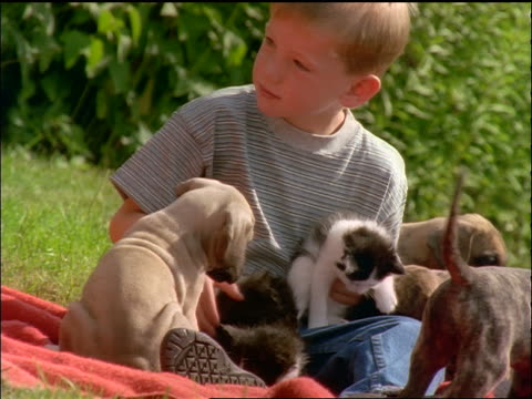 slow motion canted young boy playing with puppies + kitten on grass outdoors - 男児1人点の映像素材/bロール