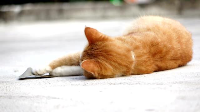 Zeitlupe : Katze spielen Blatt