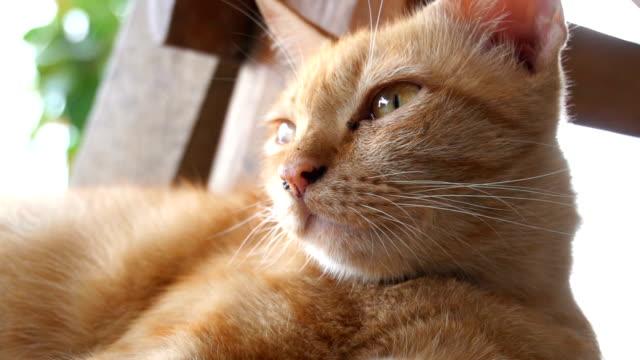 vídeos de stock, filmes e b-roll de gato em câmera lenta relaxa - bichos mimados
