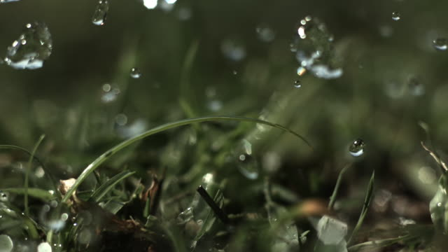 Slow motion close shot of raindrops falling onto grass.