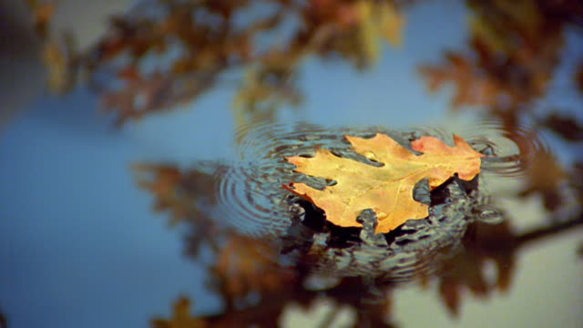 slow motion close up autumn leaf falling onto still water with reflections of tree branches - foglia video stock e b–roll
