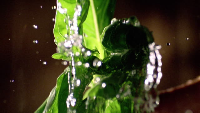 slow motion close up basil leaves flying in to air with water drops - kräuter stock-videos und b-roll-filmmaterial