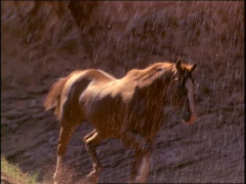 vídeos y material grabado en eventos de stock de slow motion close up horses running thru waterfall toward camera - grupo mediano de animales