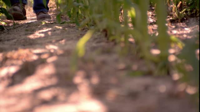 slow motion close up pan to farmer's boots walking towards camera in cornfield / shell rock, iowa - ブーツ点の映像素材/bロール