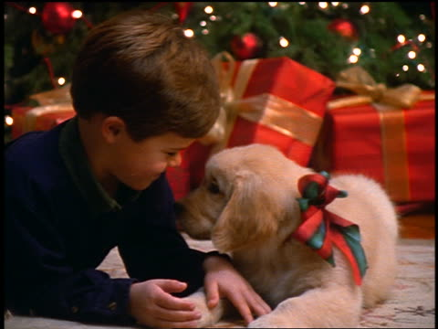 slow motion close up zoom in young boy lying on floor with puppy licking his face / Christmas tree in background