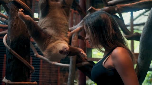 vídeos y material grabado en eventos de stock de slow motion: close-up of beautiful happy young woman interacting with sloth - costa rica