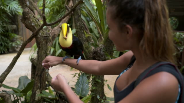 slow motion: close-up of beautiful young woman feeding toucan - 胴体点の映像素材/bロール