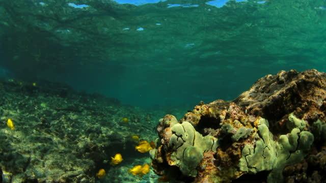 vídeos y material grabado en eventos de stock de slow motion close-up school of fish swimming by coral reef underwater - big island, hawaii - manada