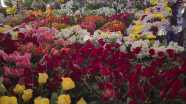 slow motion: colorful flowers on a market on busy street - tulpe stock-videos und b-roll-filmmaterial