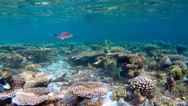 slow motion coral reef on maldives - south ari atoll - ari atoll stock videos & royalty-free footage