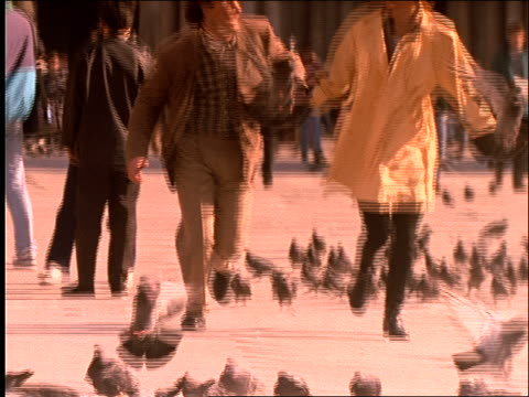 vídeos de stock e filmes b-roll de slow motion couple running thru pigeons toward camera / venice / sepia toned - cinematografia