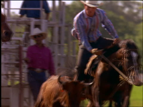slow motion cowboy jumping off horse wrestling steer to ground in rodeo - pflanzenfressend stock-videos und b-roll-filmmaterial
