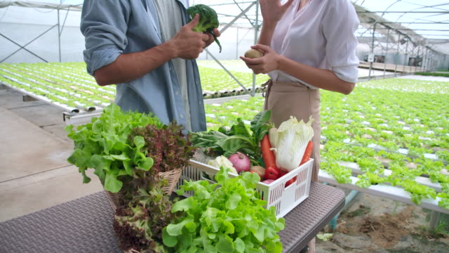 4k slow motion customer visiting organic vegetable farms and buying organic vegetables with the vegetable farm owner - crate stock videos & royalty-free footage