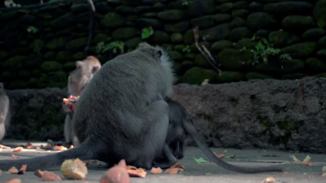 Slow Motion: Cute Baby Monkey Climbing on Mother