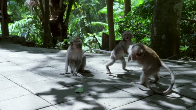Slow Motion: Cute Monkeys Playing