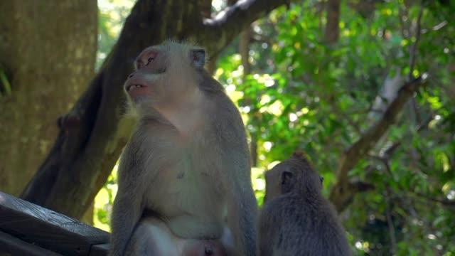 Slow Motion: Cute Monkeys Sitting on a Branch in the Jungle
