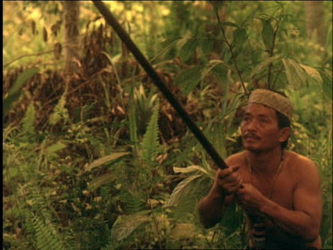 slow motion dayak man hunting with blowgun in jungle / central kalimantan / borneo / indonesia - nur männer über 30 stock-videos und b-roll-filmmaterial