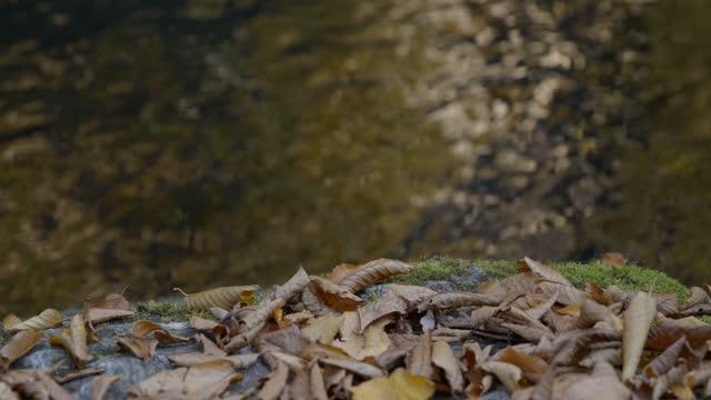 vídeos de stock e filmes b-roll de slow motion detail closeup shot of leaves and flowing water reflection - equipamento fotográfico