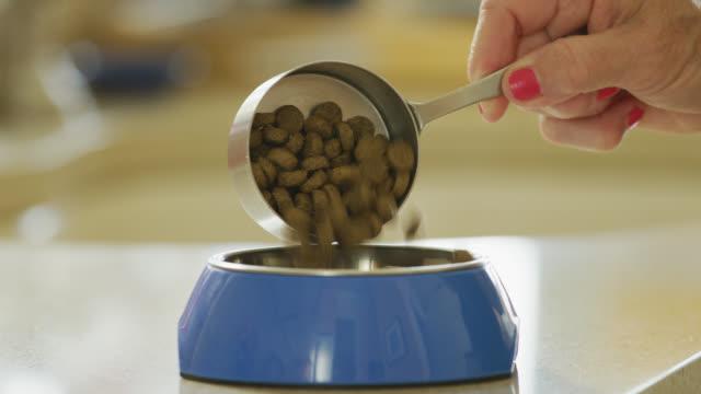 vídeos de stock, filmes e b-roll de o alimento de cão lento do movimento derrama - pet equipment