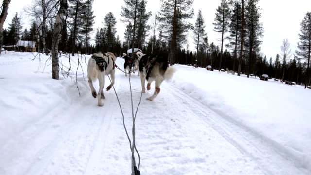 slow motion: dog musher point of view control dog sledding running through small village in norway - horsedrawn stock videos & royalty-free footage