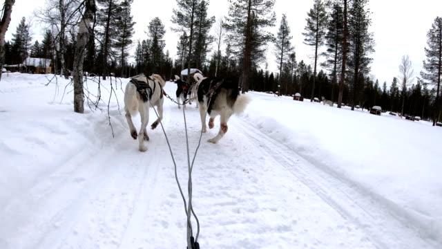 vidéos et rushes de ralenti: chien musher point de vue contrôle chien luge en cours d'exécution à travers le petit village en norvège - voiture hippomobile