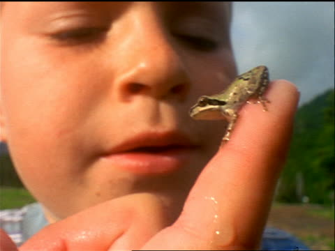 stockvideo's en b-roll-footage met slow motion extreme close up boy holding tiny frog on his finger / it jumps off / sparks meadow, cascade mountains - menselijke vinger