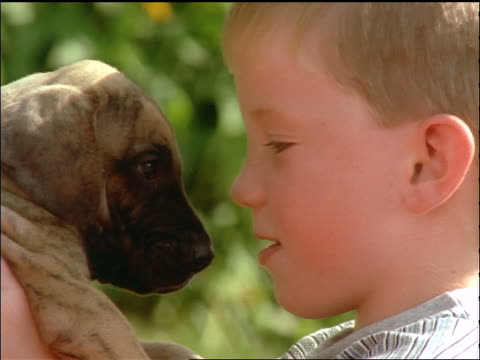 slow motion extreme close up profile of boy holding puppy close to face + rubbing noses - profilo vista laterale video stock e b–roll