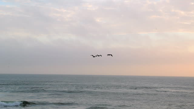 slow motion fade in shot of silhouette birds flying over sea against sky at sunset - san francisco, california - fade in video transition stock videos & royalty-free footage