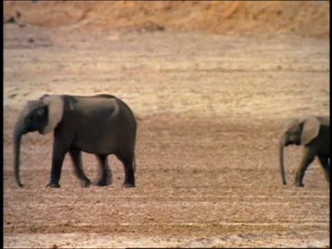 slow motion family of elephants walking on plains / africa - ゾウ点の映像素材/bロール