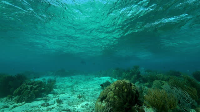 vídeos de stock, filmes e b-roll de slow motion: fish swimming by coral reef on ocean floor - belize city, belize - organismo aquático
