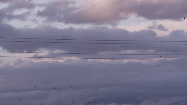 Slow motion, flock of bird fly near telephone wires