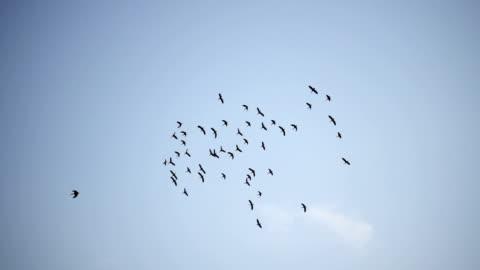 vídeos y material grabado en eventos de stock de cámara lenta - bandada de pájaros volando - pájaro