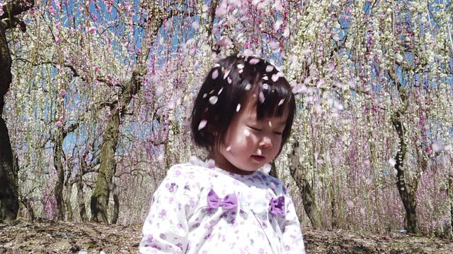 slow motion flower petals falling over young girl in plum blossom tree park in japan - blossom stock videos & royalty-free footage