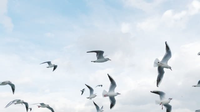 slow motion flying seagull in sky - sea bird stock videos & royalty-free footage