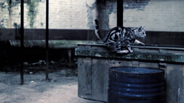 Slow motion footage of a cat jumping up to a concrete surface in a warehouse