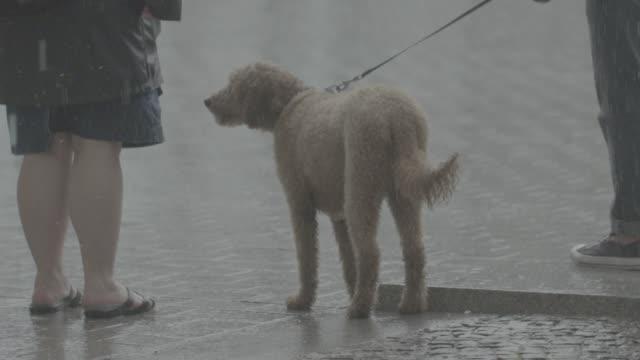 slow motion footage of a dog shaking off rainwater in berlin, germany on wednesday, july 26, 2017 - イーサリアム点の映像素材/bロール